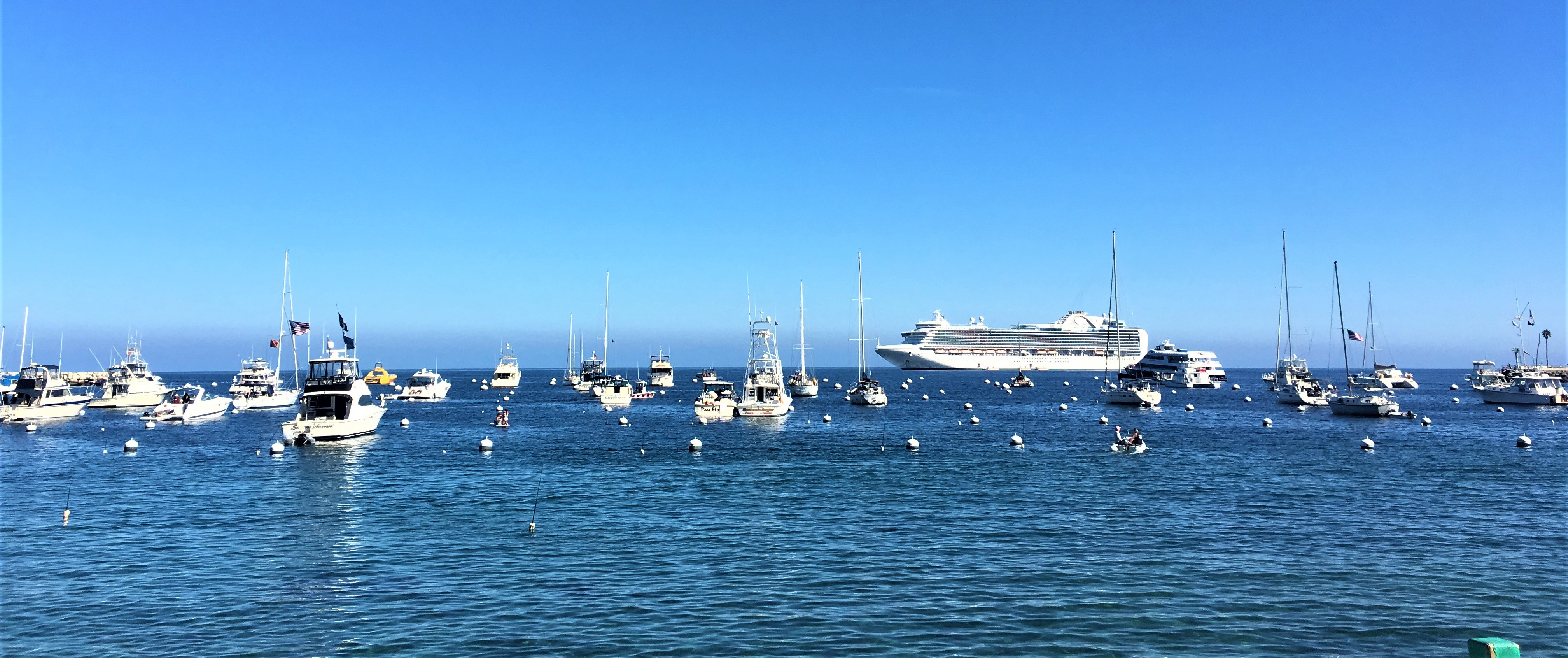 What is there to see in Catalina Island California? - Lucy Williams Global